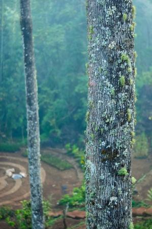 ourdoor: Moss Lichen Trunk Stock Photo