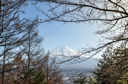 fuji san: Mount Fuji view with branches of tree in japan
