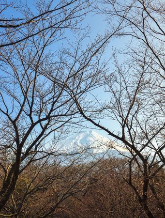 fuji san: Mount Fuji view with branches of tree-Hino-Tokyo-japan Stock Photo
