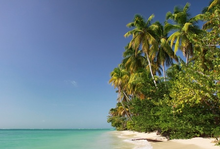 coast line near pigeon point (tobago, west indies) in the morning photo
