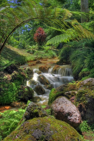 Creek in tropical landscape (Sao Miguel, Azores)
