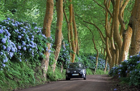 Lonely side road at Sao Miguel (Azores Islands)  with car photo
