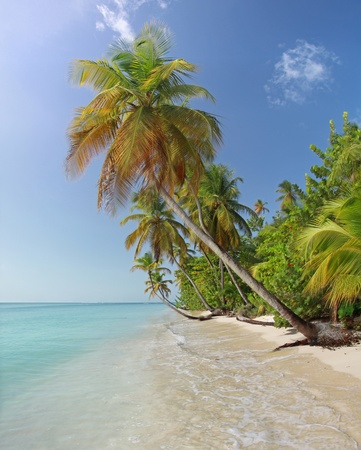 Beach near Pigeon Point (Tobago, West Indies) photo