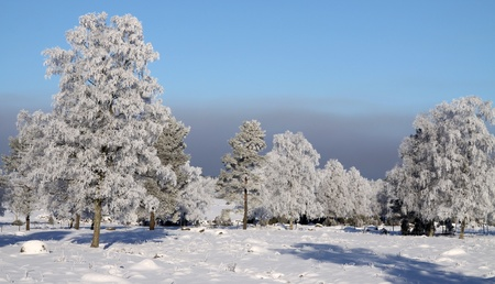 winter landscape in the sun (Smaland, sweden) photo