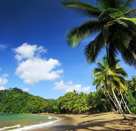 englishman: Beach of the Englishman Bay (Tobago) 3