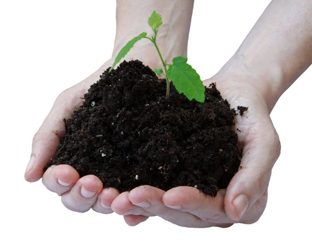Hands and plant isolated on white background Stock Photo - 14754601