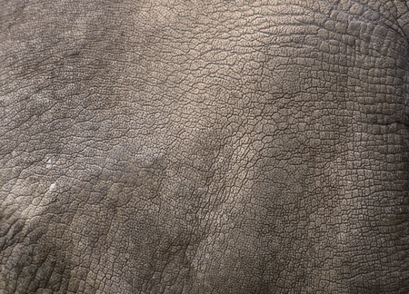 Close up view of Rhino skin  White rhinoceros  as background