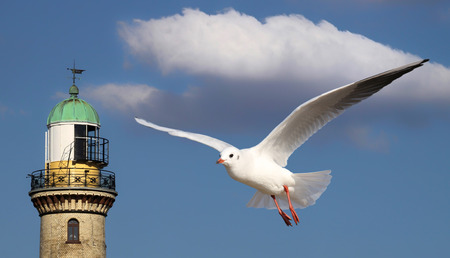 western europe: Seagull in front of lighttower