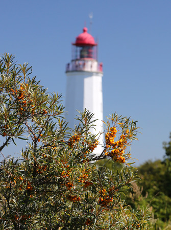 upright format: Sallow thorn berries in front of the Lighthouse near Monastery Iceland Hiddensee Germany Stock Photo
