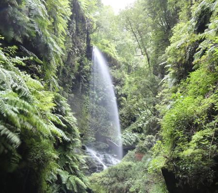 la: Waterfall Cascada Los Tilos - La Palma, Canary Islands Stock Photo