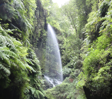 Waterfall Cascada Los Tilos - La Palma, Canary Islands Stock Photo