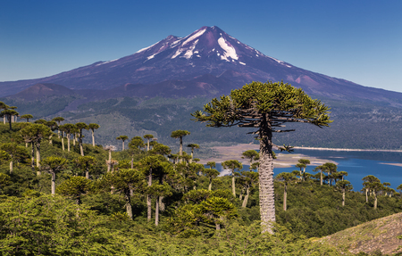 Volcano Llaima at Conguillio NP - Chile