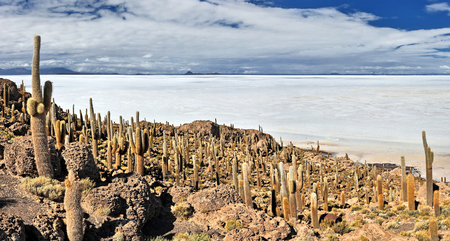 incahuasi: View from Isla Incahuasi over Salt Lake Uyuni - Bolivia
