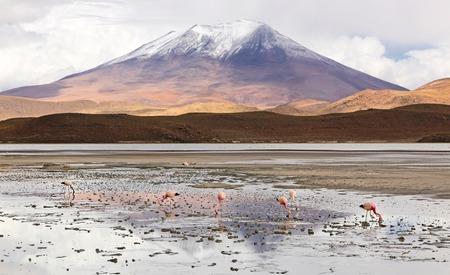 Laguna Hedionda with flamingos - Bolivia