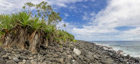 Coast line near Anse des Cascades at island La Reunion with tropic bird