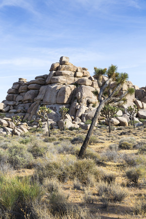 Joshua Tree National Park X, California, USA
