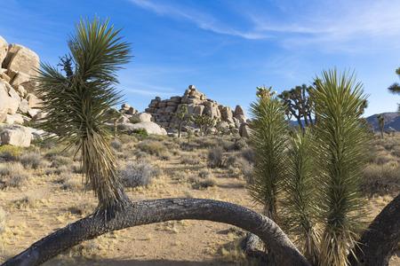 joshua tree national park: Joshua Tree National Park V, California, USA Stock Photo