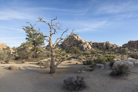 joshua tree national park: Joshua Tree National Park, California, USA