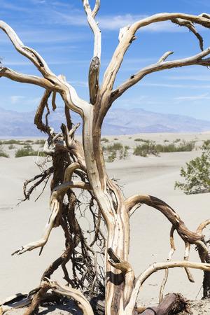 death valley: Death Valley National Park, California, USA