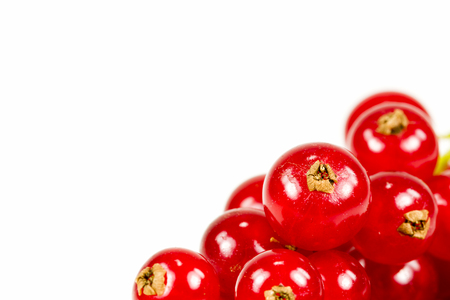 vitamin rich: fresh redcurrant isolated on white background