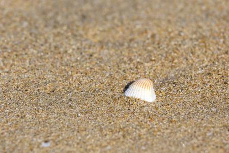single shell on the Thiruvalluvar Nagar Beach, Chennai, Tamil Nadu, India Stock Photo