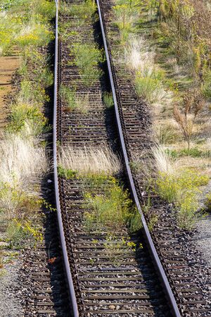 Overgrown tracks with old wooden planks, Löbau, Saxony, Germany