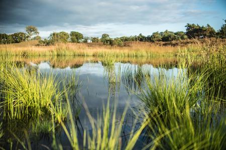 swamp: Swamp view