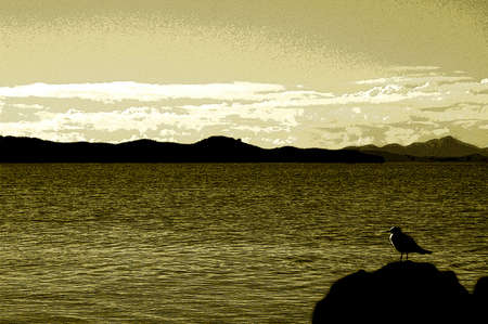 lonely bird: Lonely bird watching the sea. Shot with grain effect and sepia colors. Stock Photo