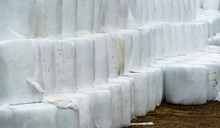 Silage hay bales wrapped in white plastic, stacked on top of each other. . High quality photo