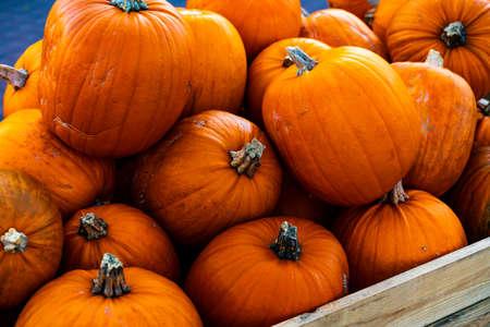 Pile of ripe orange pumpkins ready for Halloween. . High quality photo Stock Photo