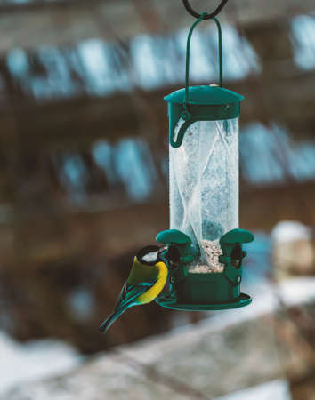 Great tit, Parus major, eating from a garden bird feeder on a cold and snowy winters day. High quality photo