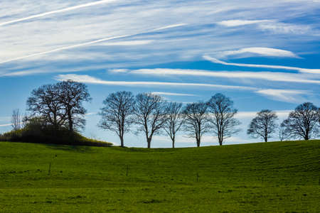Large trees silhouetted against a blue sky Stock Photo