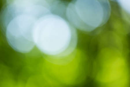recorded: Image part of bokeh background series recorded in a forrest, showing diffuse blurred highlights of white, green and blue tints Stock Photo