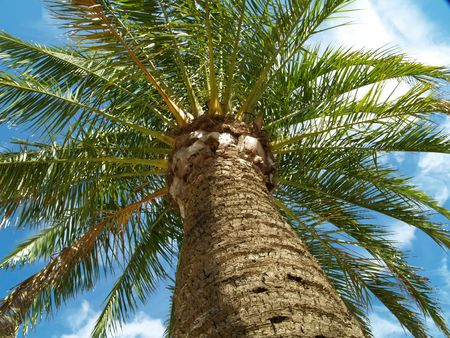 fiestas: Palm on summer