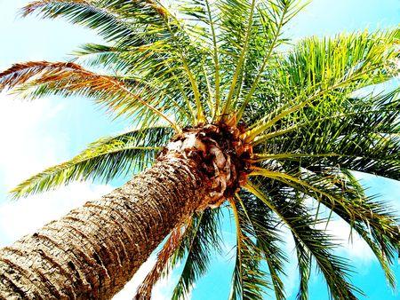 singular: Palm on summer