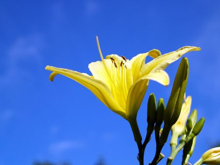 unblemished: Yellow flower under blue sky