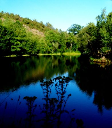 environmentalism: Lake and forest in summer Stock Photo