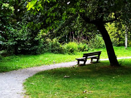 peacefulness: A bench and a tree in a public park Stock Photo