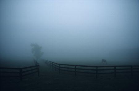霧の中での牧場の広いイメージ。 写真素材 - 3788449