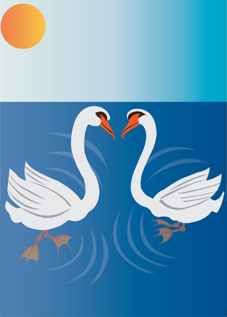 mania: Swans swimming on a shallow pond