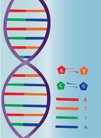 A  side view representation of a DNA strand