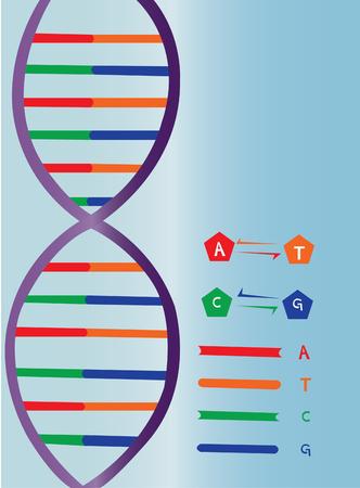 Una representación lateral de una hebra de ADN