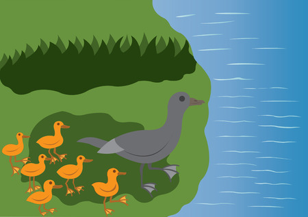 a duck leading its chics to water Illustration