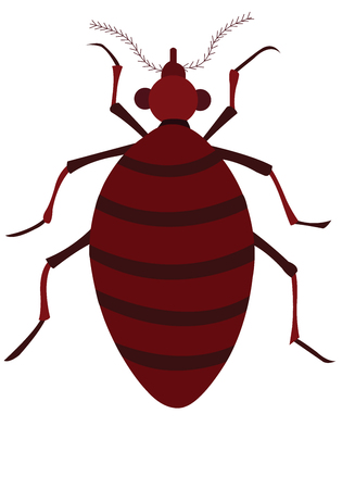 a bedbug with belly full of blood
