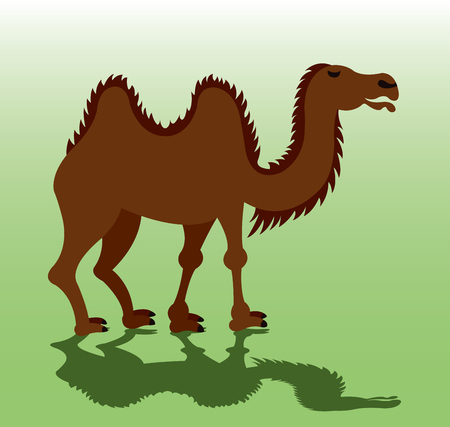 A Bactrian Camel eager to carry luggage, Illustration