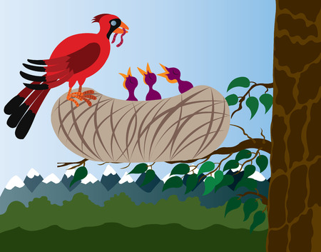 A red Cardinal Bird delivering food to its chics, Illustration