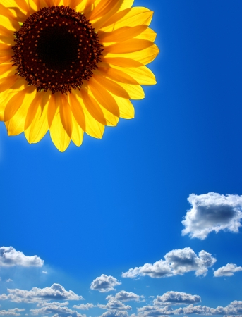 at ease:  Sunflower against the blue sky Stock Photo