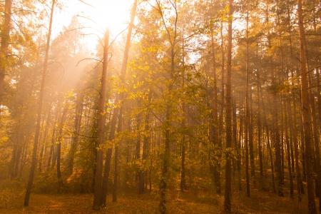 Sunshine in the autumn wood Stock Photo - 14692174
