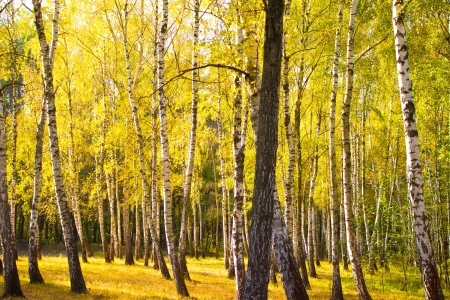 Autumn gold wood Stock Photo - 14692179