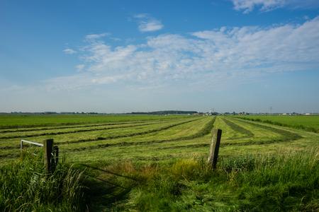 polder: Polder landscape in the Netherlands